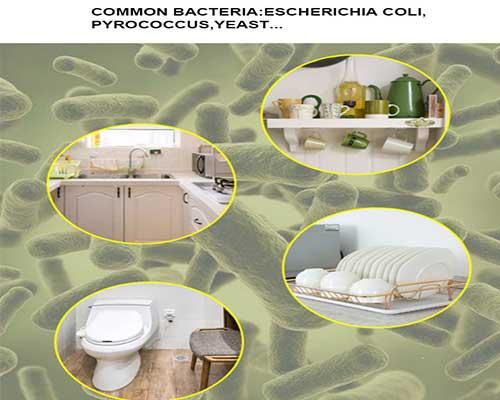Common Bacteria